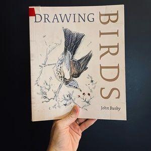 Drawing Birds by John Busby